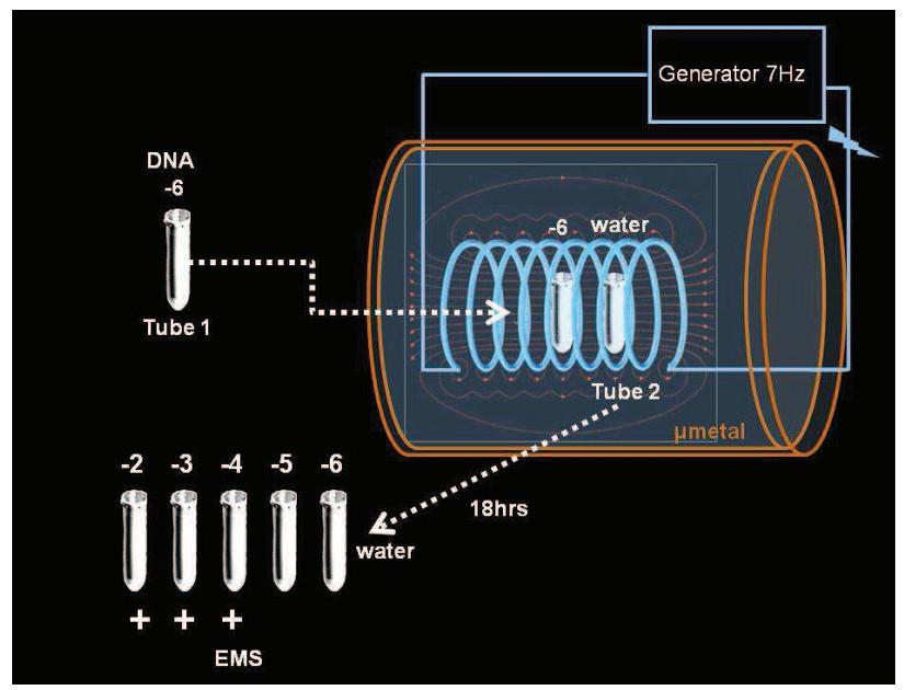Передача генетической информации