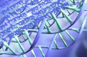 ADN y hebreo